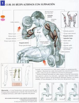 Músculos, masa muscular, gain, biceps, triceps, hombro, espalda, abdomen, abdominales, serratos, maduración muscular, gym, gym beast, workout, fit, fitness , proteína, perdida de grasa, crecimiento de musculos, training, muscle, mass, chest, healthy