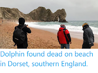 https://sciencythoughts.blogspot.com/2020/01/dolphin-found-dead-on-beach-in-dorset.html