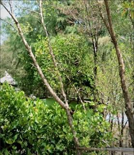 mangrove center tuban by cahyadwip