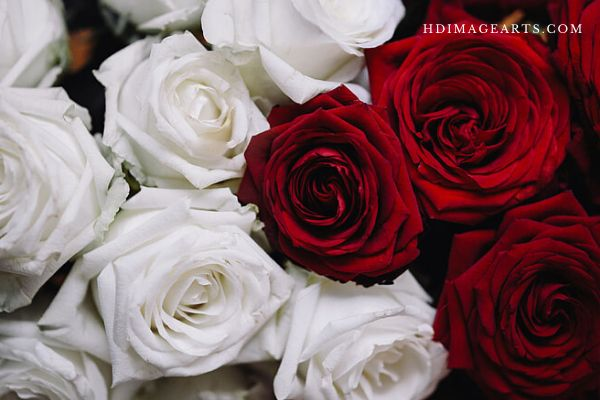 flowers-lmages-for-love-5