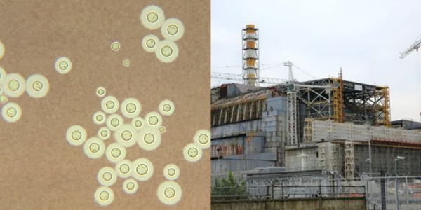 https://www.mycrazyemail.net/2019/06/dyk-facts-about-chernobyl-nuclear.html