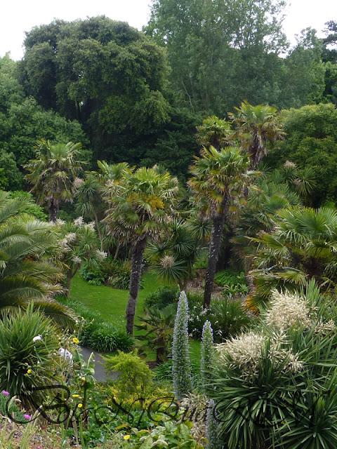Botaniquarium - Trachycarpus fortunei architectural