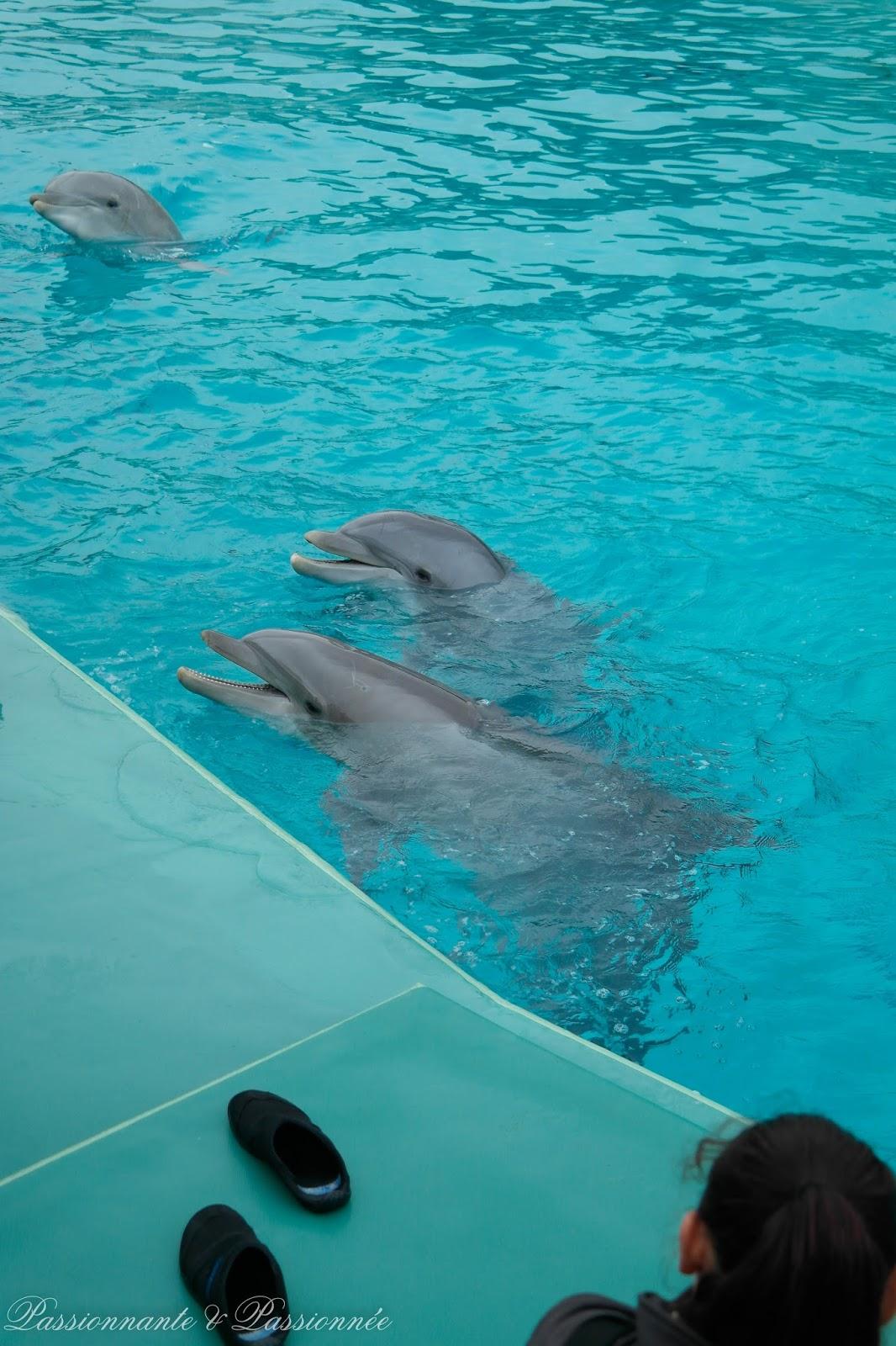 L'école des dauphins