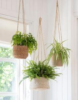 Best Hanging Plants Indoors