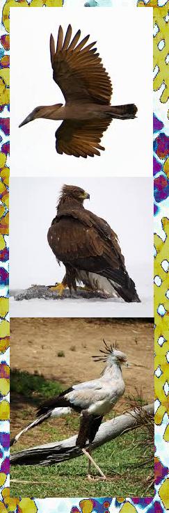 Impundulu the hammerkop, eagle and secretary bird of lightning.