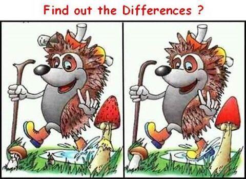 Tìm điểm khác nhau thú vị