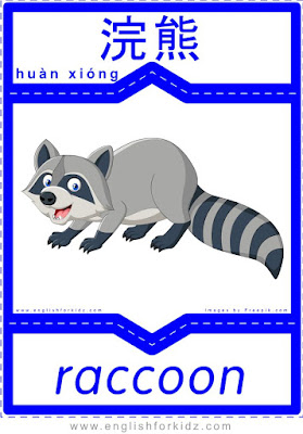 Raccoon - English-Chinese flashcards for wild animals topic