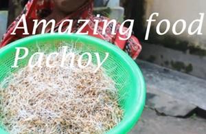Village Food | Amazing food pachoi is prepared