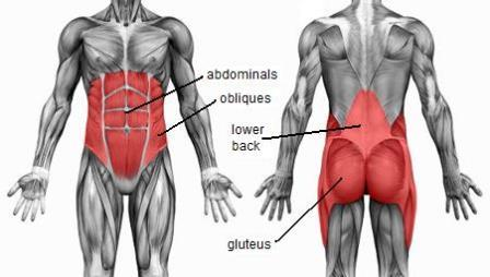 Anatomy and Physiology of the Core Muscles in Training the Abdominal Muscles