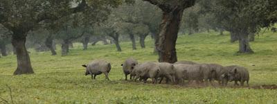 hústermékek marketingje helyett PR munka