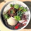 Δημιουργείστε εύκολα εντυπωσιακές γλάστρες με Παχύφυτα