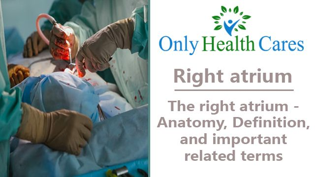 Right Atrium - Anatomy, Definition, and Important Terms