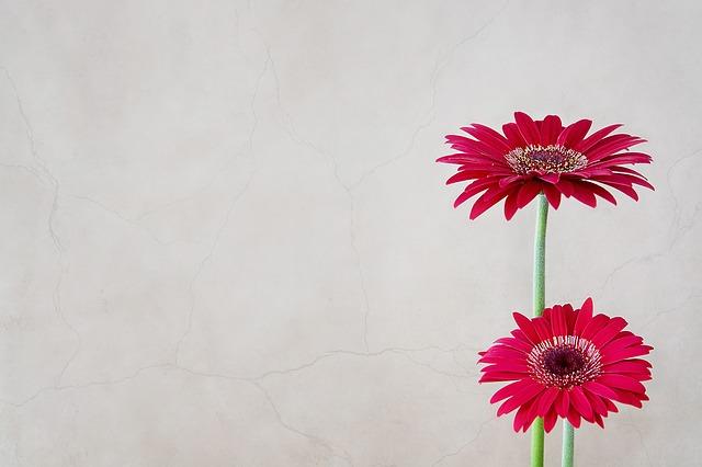 y nghia hoa dong tien