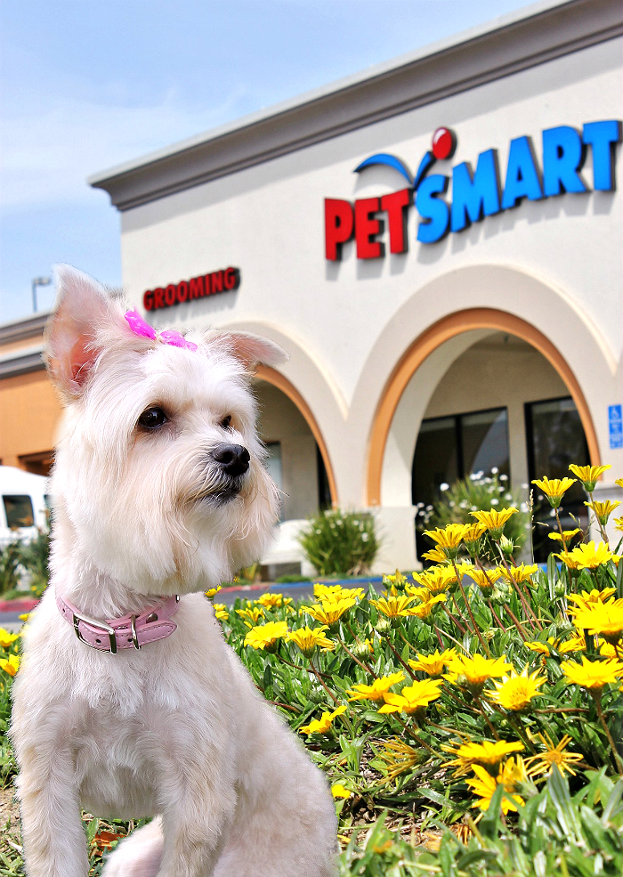 Book your Spring grooming appointment online or in person at PetSmart today and build a custom #PetSmartGrooming package with services such as teeth cleaning, nail grinding and polish, chalking, and more. And yes, there are services for cats too! #Sponsored