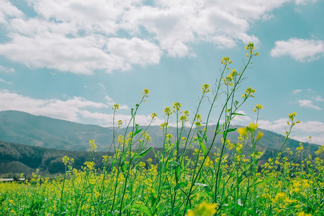 Dalat- the heaven of wild sunflowers
