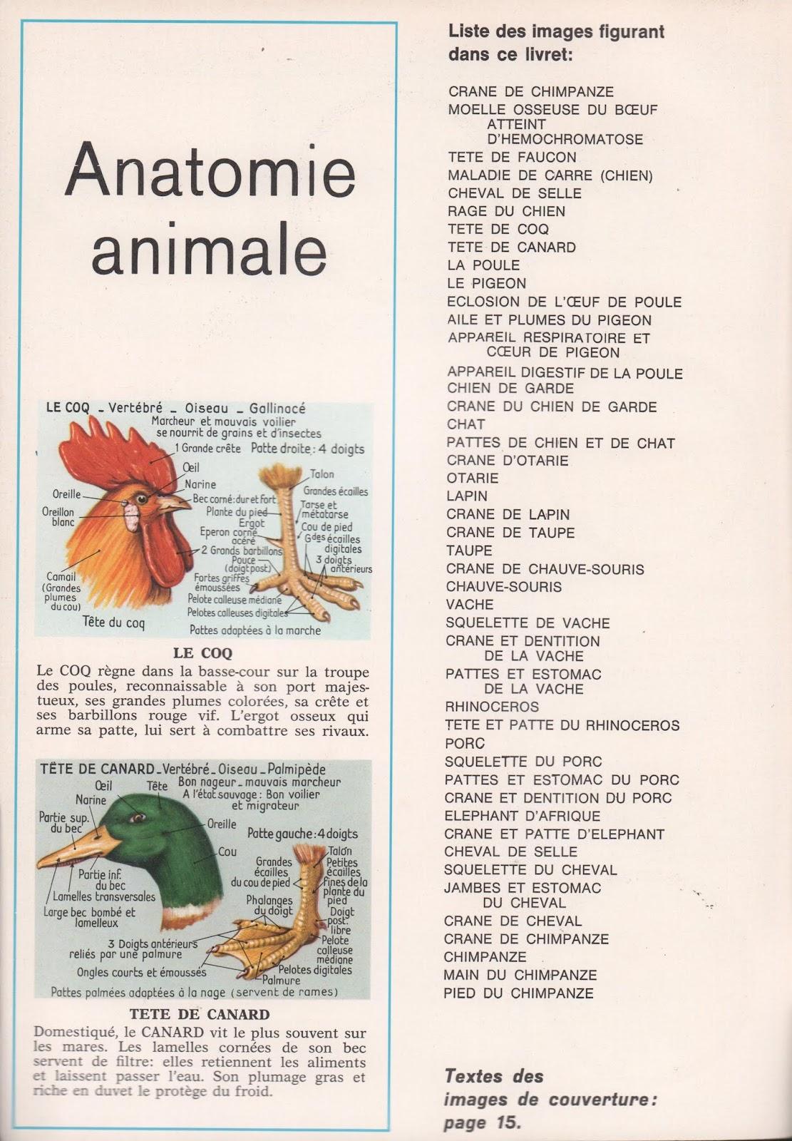 Großartig Anatomie Des Textes Ideen - Anatomie Von Menschlichen ...
