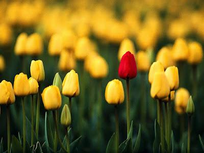 صور ازهار صفراء