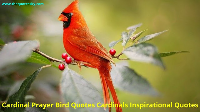 57+ Cardinals Bird Quotes [ 2021 ]