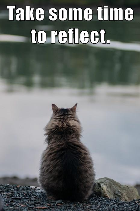 Take Time To Reflect Quotes: Growth Mindset & Feedback Cats: Take Some Time To Reflect