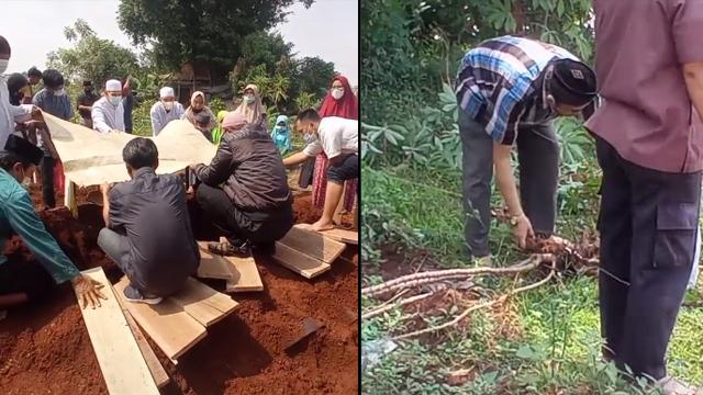 Yang Lain Sibuk Kuburkan Jenazah, Bapak-bapak Ini Malah Nyabut Singkong di Pemakaman