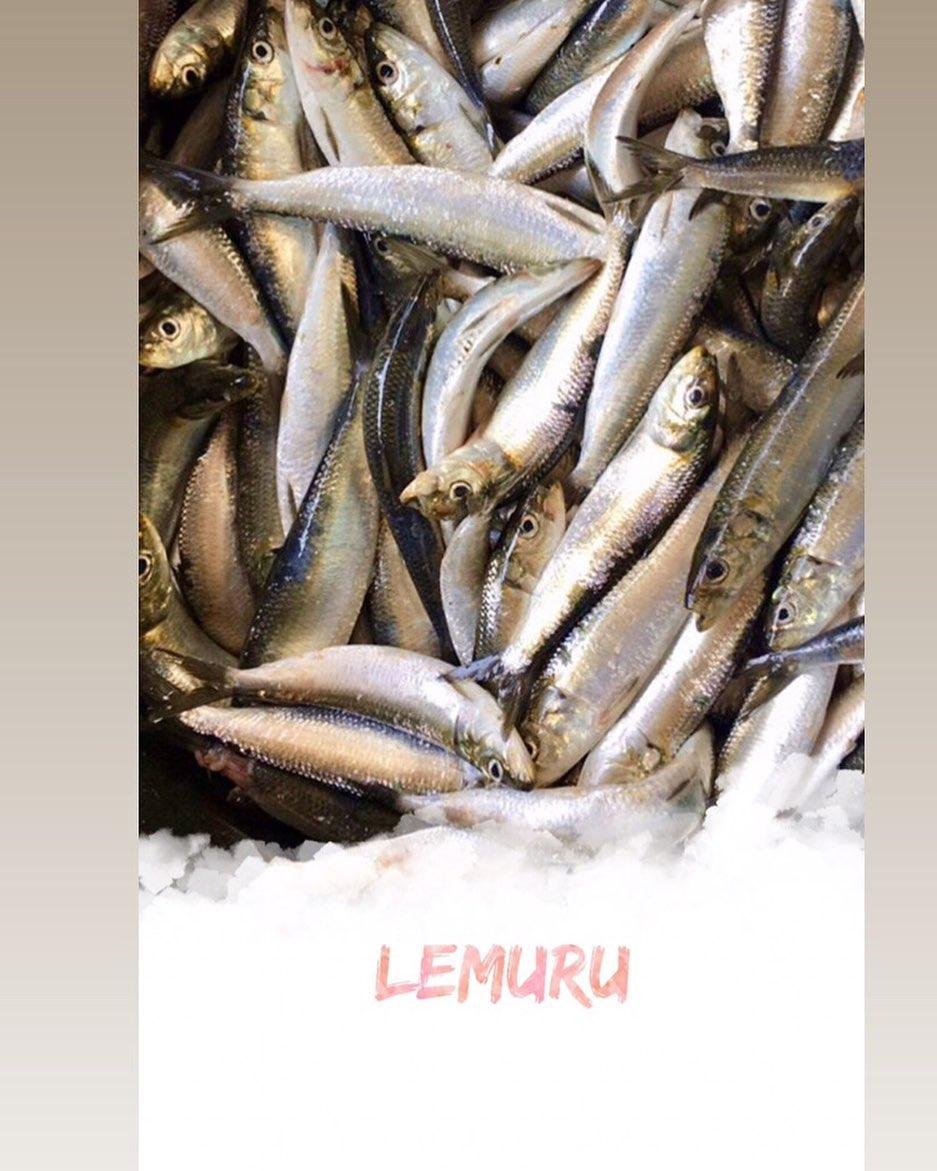 Fakta-Fakta Ikan Lemuru yang Perlu Diketahui
