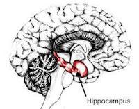 Informasi Agama: Hippocampus pada otak