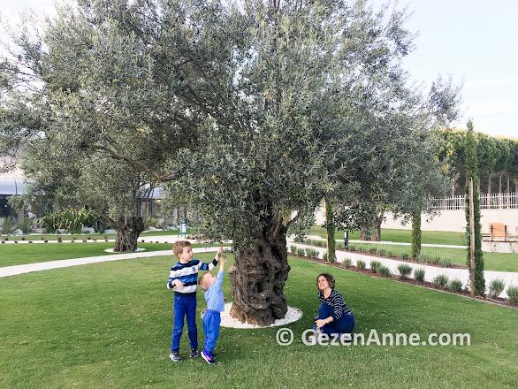 Ramada Kazdağları otel bahçesi ve zeytin ağaçları, Güre