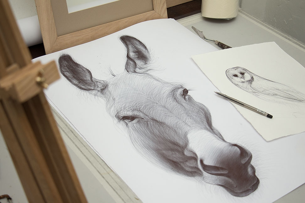 12-Donkey-Yelena-Yefimova-Animals-Drawn-with-Ballpoint-Pens-www-designstack-co