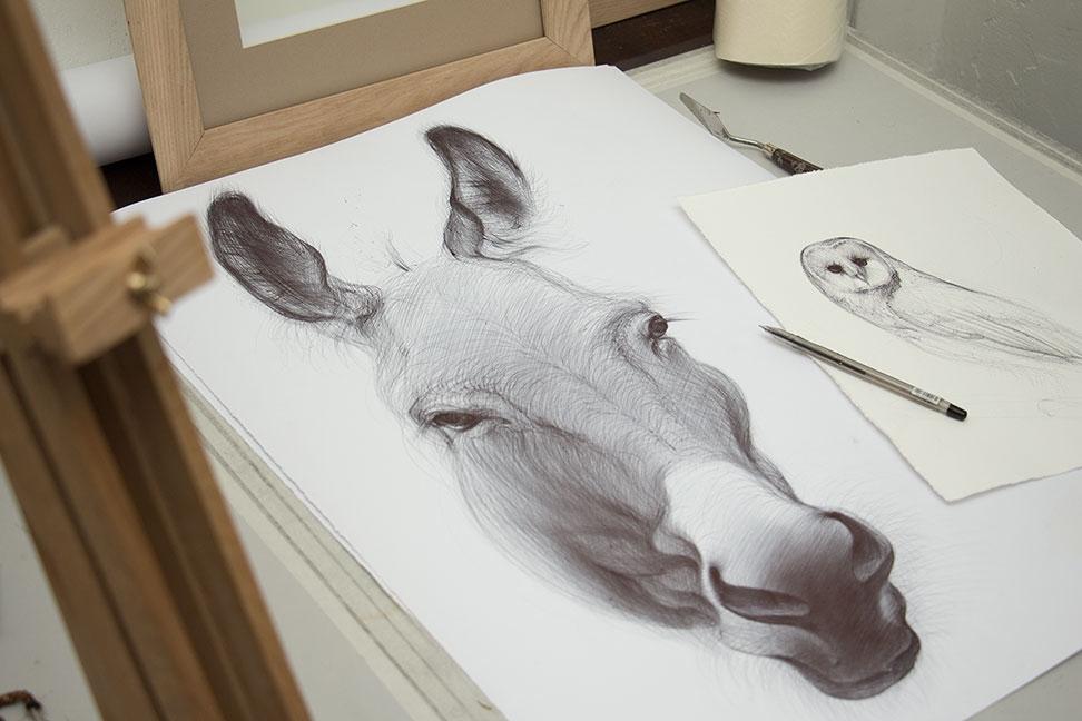 12-Donkey-Yelena-Yefimova-Animals-Drawn-with-Ballpoint-Pens-www-designstack-co