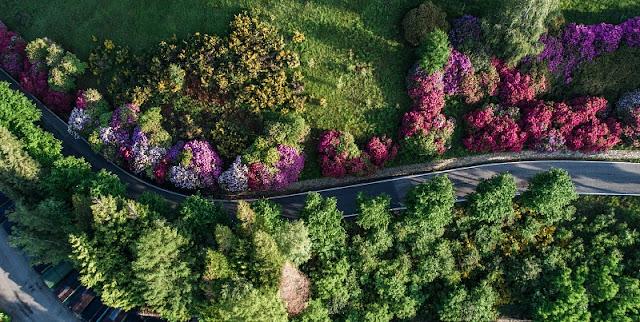 Oasi Zegna rododendri