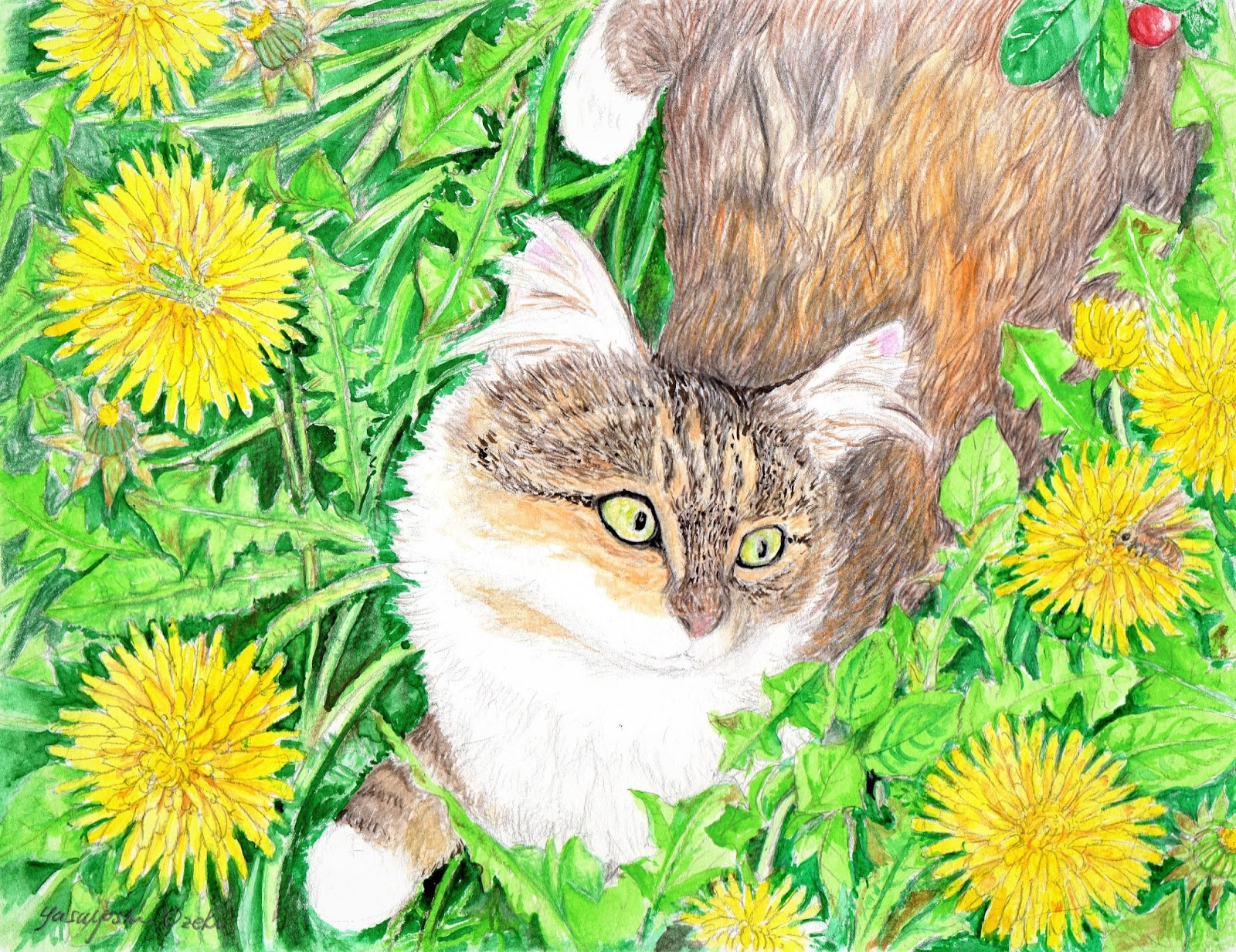 やっちゃんのネコと動物イラスト: ノルウェー猫(ノルウェージャン