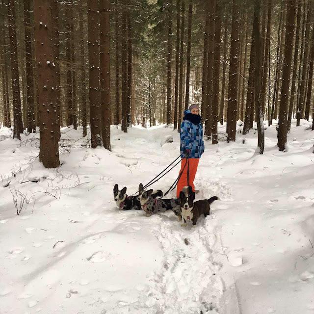 w góry z psem, karkonosze z psem, pies w górach