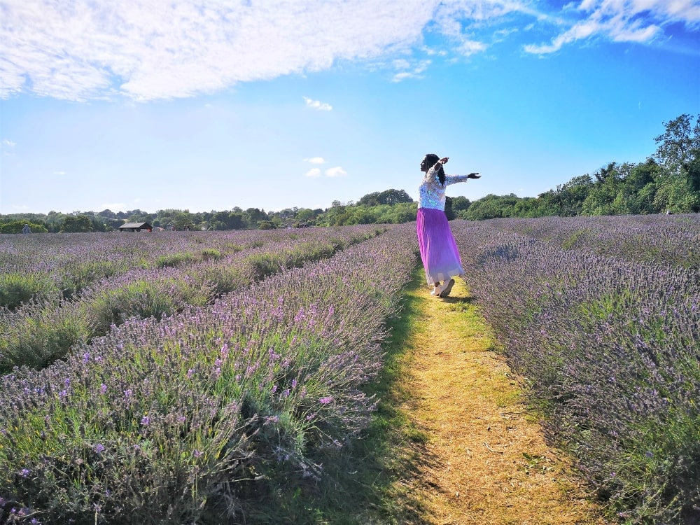 Lavender_Fields