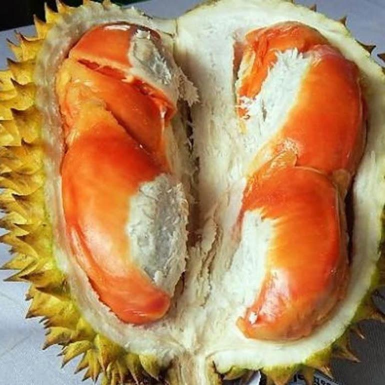 Bibit Buah Durian Simas Termurah Bisa Cod Blitar