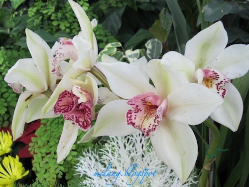Fabulous Orchids