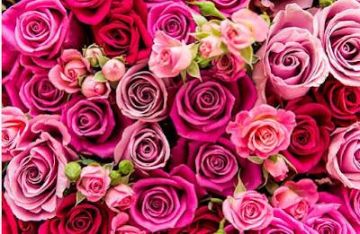 las flores favorecen el buen animo