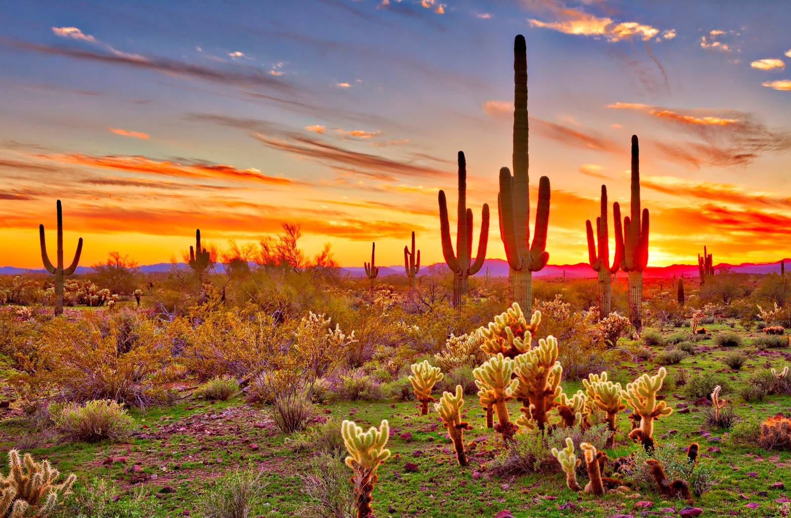 Deserto   Desierto
