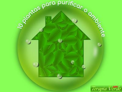 10 plantas para purificar o ambiente