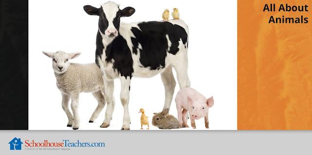 All About Animals; photo of lamb, calf, chicks, bunny, pig, duckling; SchoolhouseTeachers.com