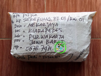 Benih pesana   PUJIA Purwakarta, Jabar   (Sesudah Packing)