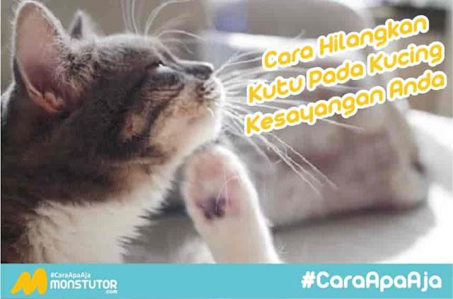Cara mengatasi dan menghilangkan kutu pada kucing peliharaan