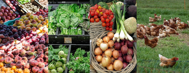 Best all time vegetable Onions - Trading, Reselling, Wholesale Business Idea - Farm Fresh Products