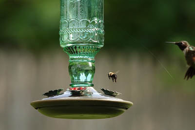 Photo of a bee and hummingbird at a combo vacuum/saucer type feeder