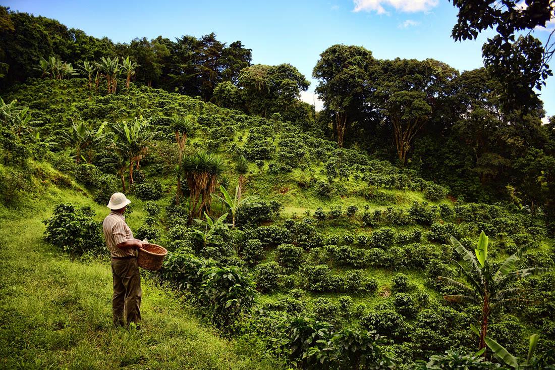 Кофейный тур в Монтеверде, Коста-рика
