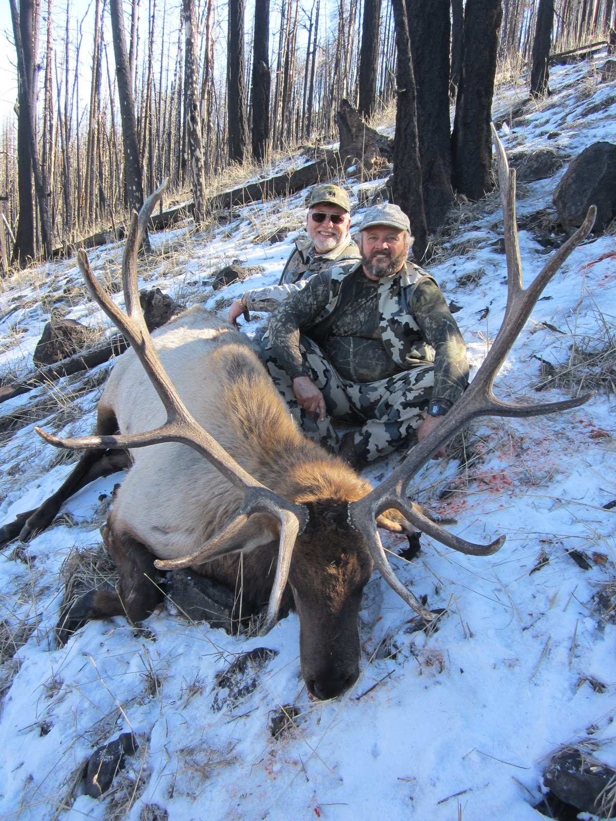 Burnt Timber Outfitters: Arizona late bull elk in Unit 1