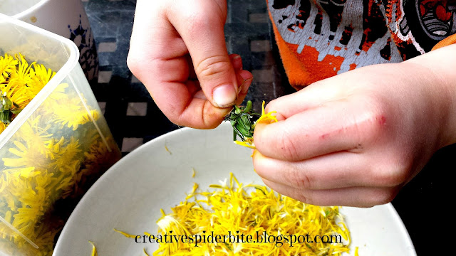 little boy plucking dandelion flower heads for dandelion syrup