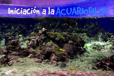 ▶ Consejos para tener éxito en nuestro primer acuario