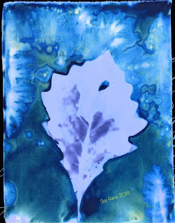 Wet cyanotype_Sue Reno_Image 461