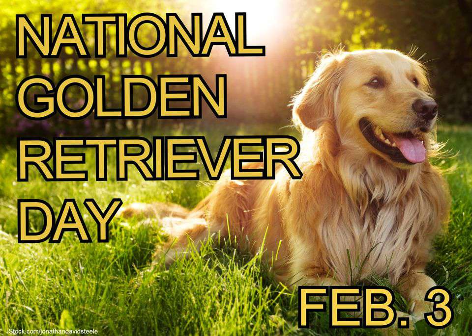National Golden Retriever Day Wishes Beautiful Image