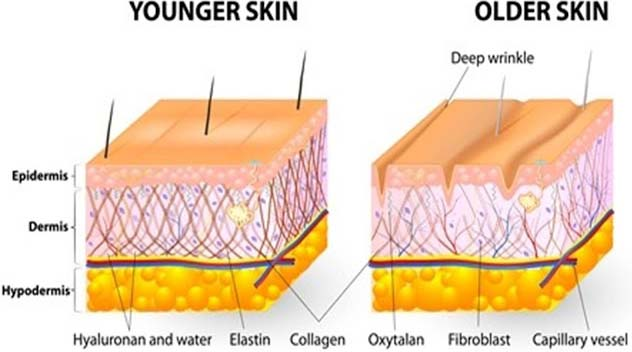 Elastin and Collagen are stringy proteins that are accountable for linking as well as sustaining other fibers in the system. Natural Aloe Vera, by assisting the development of these necessary proteins, can be utilized to put off or holdup the overall look of crinkles.
